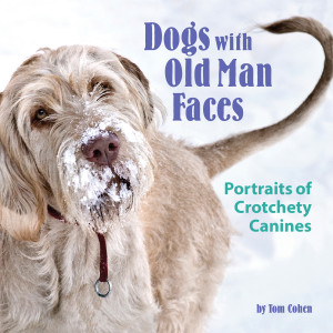 """Dogs With Old Man Faces"" by Tom Cohen"
